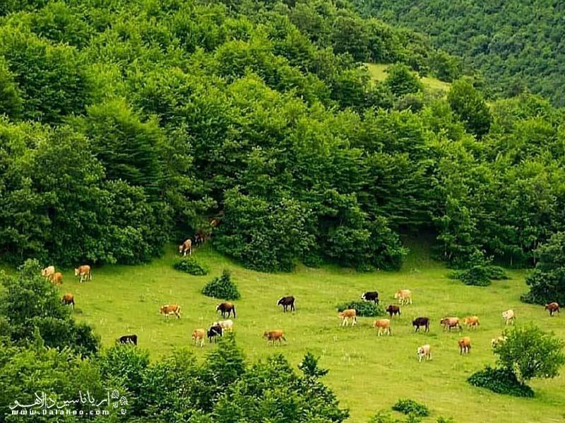 """جنگلهای ارسباران از نظرجغرافیایی به اتفاق جنگلهای خزری در زمره منطقه """"هیرکانی"""" قرار می گیرد"""