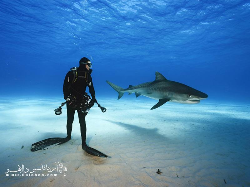 بیشتر گونههای کوسهها مانند کوسه نهنگی حمله نمیکنند و برای انسانها بیضرر هستند.