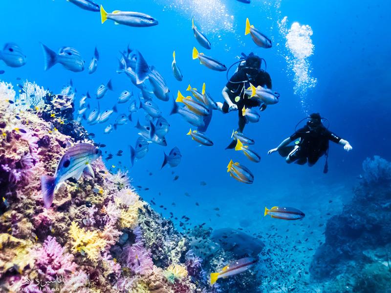 شفافیت بیبدیل آبهای این منطقه، مرجانهای بکر و ماهیهای رنگارنگ
