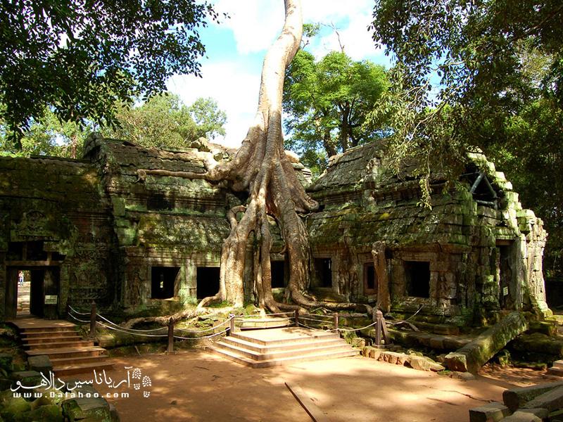 ریشههای درختها مثل اختاپوسی معبد را در آغوش گرفته.
