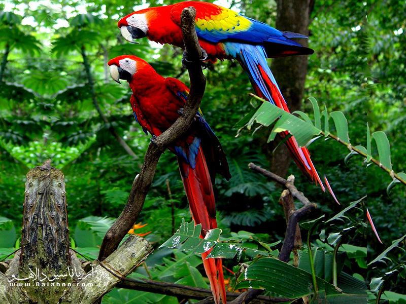 در سفر به برزیل میتوانید با پرندههای دوستداشتنی و خوشآب و رنگ «باغ پرندگان ایگوآسو» آشنا شوید.