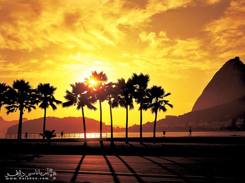 اعتقاد عمومی وجود دارد که نام برزیل از نوعی درخت به اسم pau-brasil گرفته شده.
