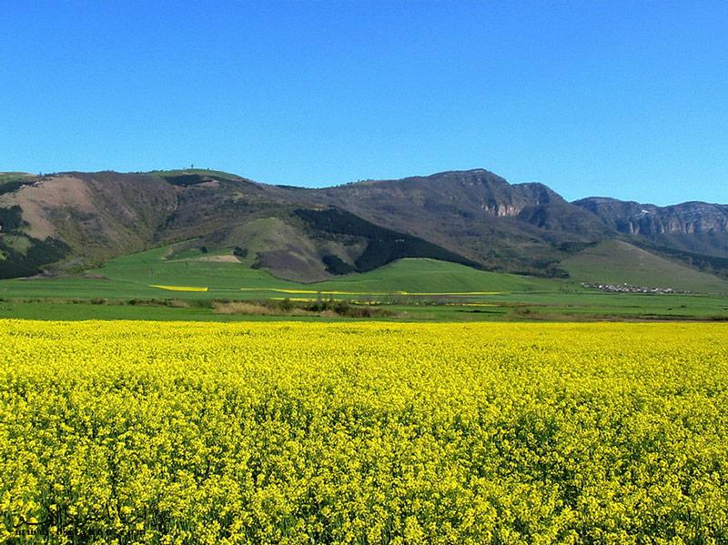 به نواحی شمالی استانهای گلستان و خراسان شمالی ترکمن صحرا میگویند.