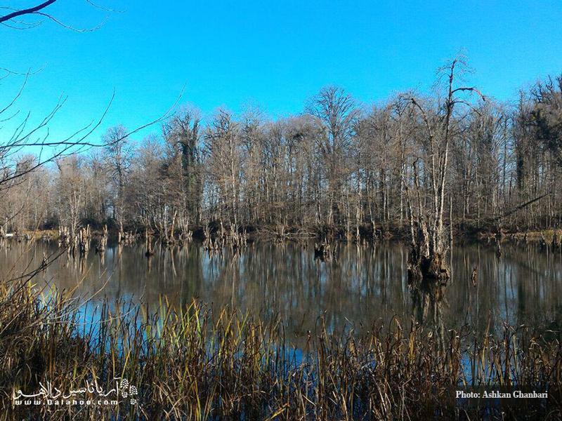 وقتی درختان نیز بیبرگ میشوند دریاچه همچنان زیباست.