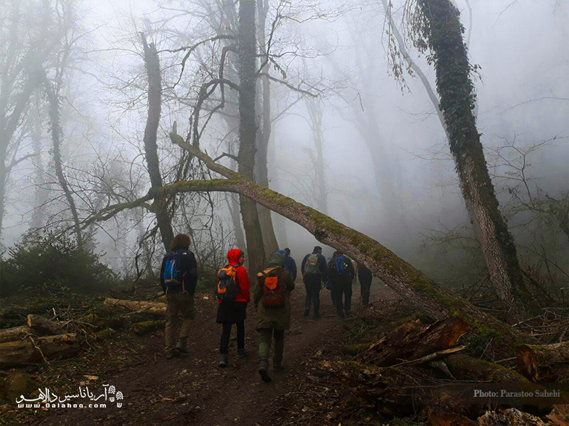 مسیر دریاچه ارواح در یک روز مهآلود.
