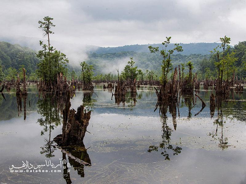 در دریاچه ارواح تنههای درخت سر از آب بیرون آوردهاند.