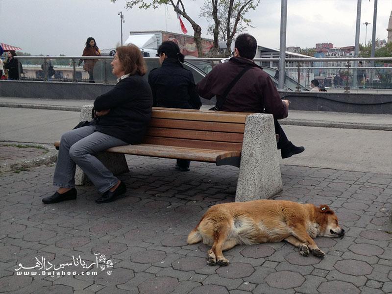 حیوانات با خیالی آسوده در کنار مردم زندگی میکنند.
