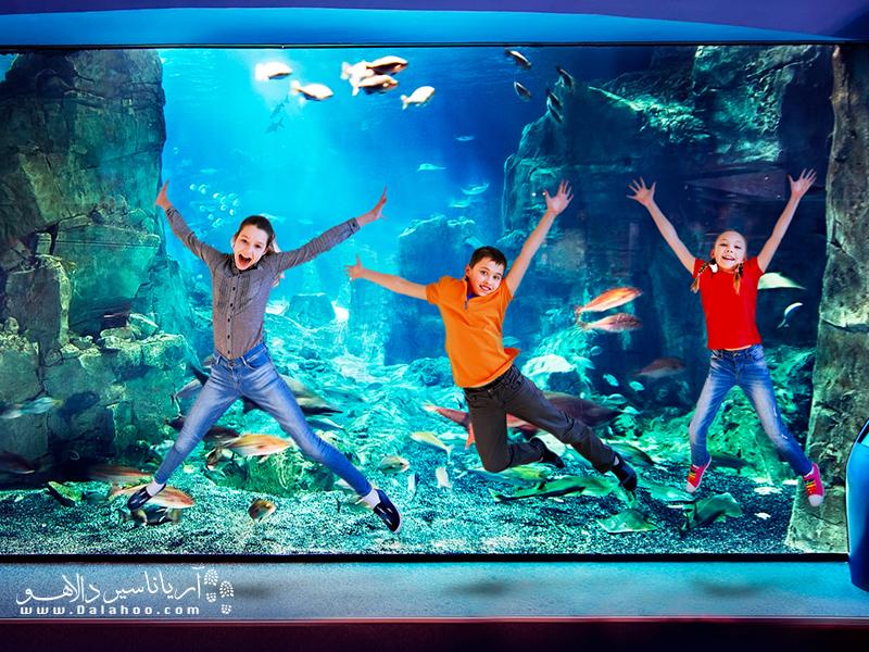 هیجان کشف دنیای زیر آب در آکواریوم استانبول.
