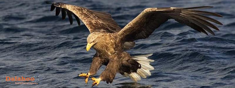 The Miankaleh peninsula is a habitat for migratory birds.