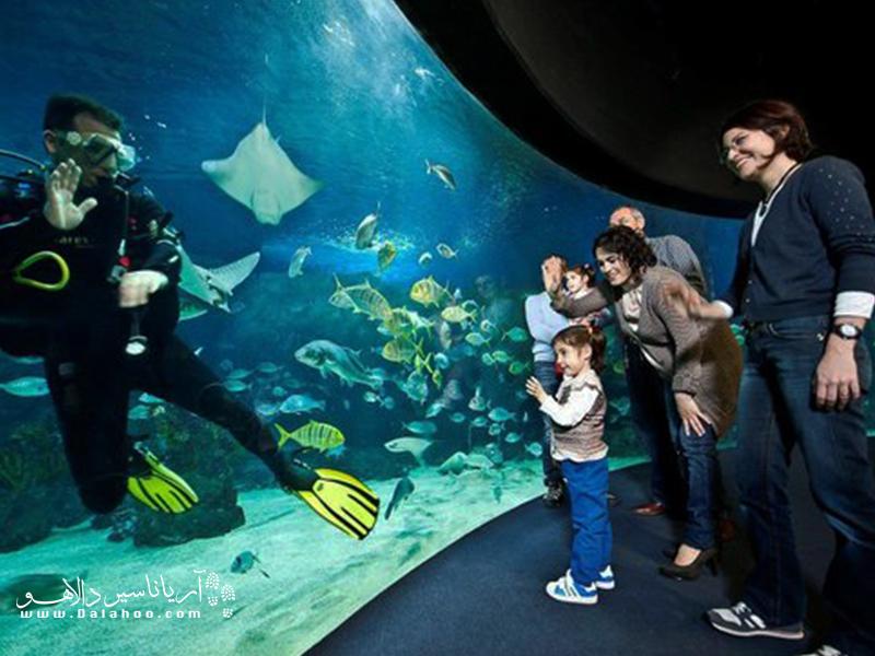 نمای 270 درجهای از  دنیای زیر آب در اتاقی به نام اتاق اقیانوس در سی لایف در انتظار شماست.