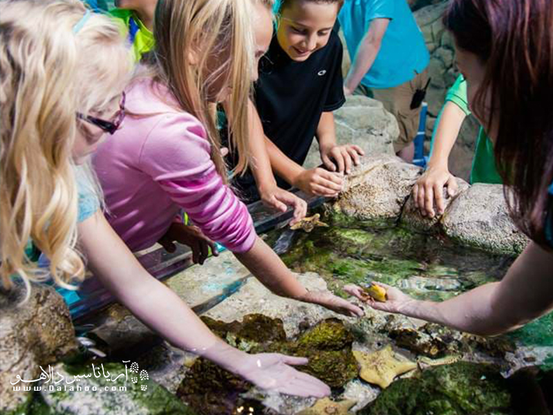 در حوضچههای تعاملی آکواریوم سی لایف این فرصت را دارید تا بعضی از جانداران دریایی را لمس کنید و آنها را از نزدیک ببیند.