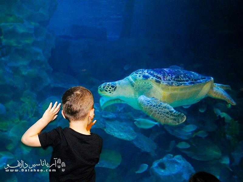 ملاقات با لاکپشتها از نمای نزدیک.