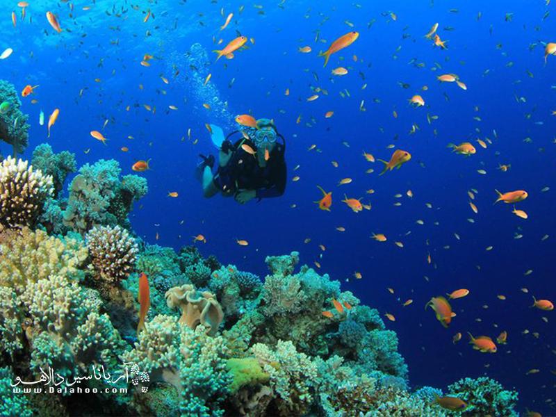 اولودنیز به دلیل شفافیت آبش به بهشت غواصان تبدیل شده است.