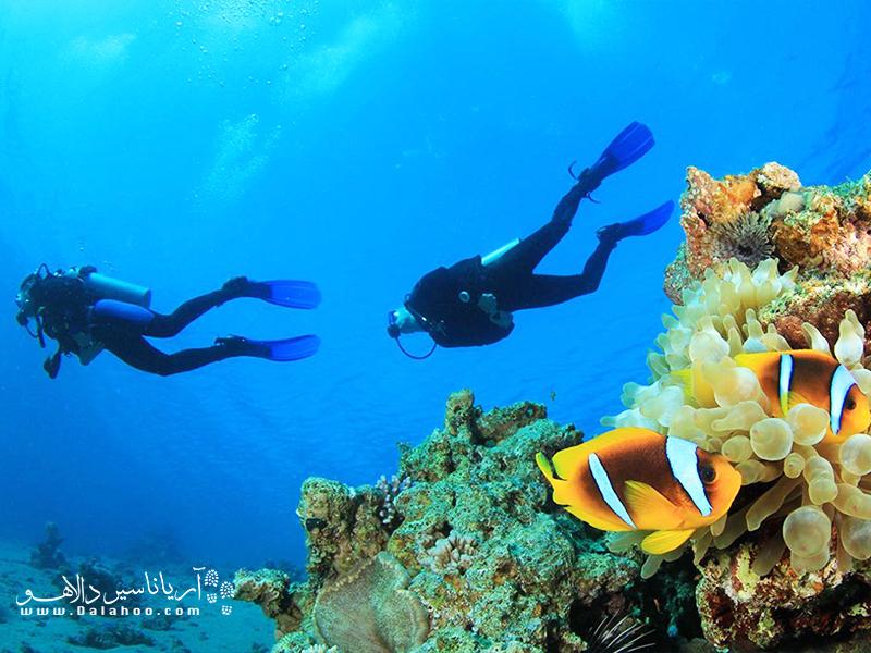 ر بیش از هر چیز به کشف گونههای متنوع گیاهی، اسفنجها و مرجانهای دریایی اهمیت میدهید، کاس را انتخاب کنید.