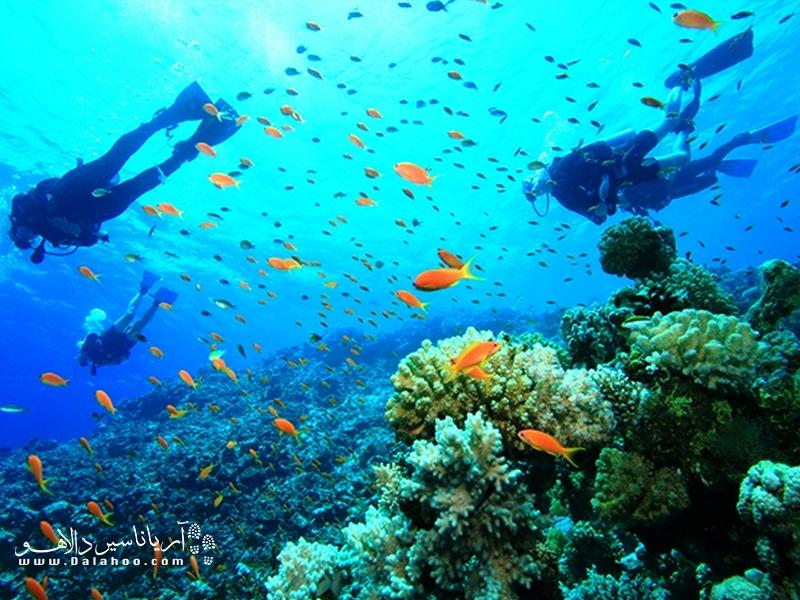 برای دیدن صحنههای رویایی زیر آب سری به کمر بزنید.