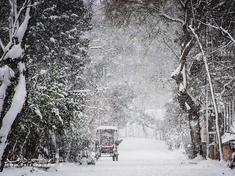 درشکهسواری در روزهای سرد بارانی و برفی در جزیره بیوک آدا لذتبخش است.