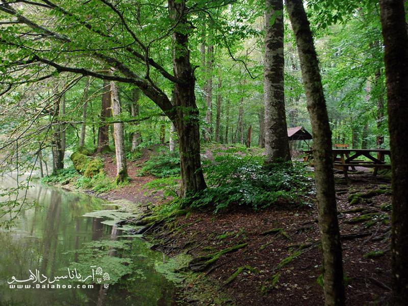 پارک ملی هفت چشمه فضای بسیار خوبی را برای عکاسی، قدم زدن و پیادهروی و البته پیک نیک و کمپینگ دارد.