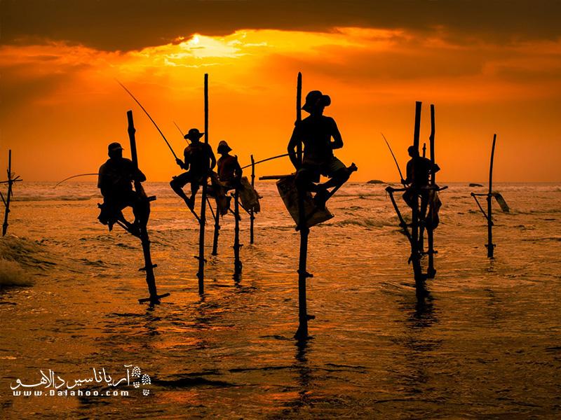 اینروزها ماهیگیران سریلانکایی به جای صید ماهی برای عکاسان ژست میگیرند و پول بیشتری در میآورند.