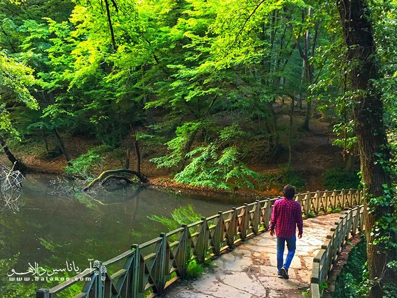 در جنگل بلگراد محل پیادهروی و دو برای کسانی که علاقهمند به ورزش در میان جنگل هستند طراحی شده است.