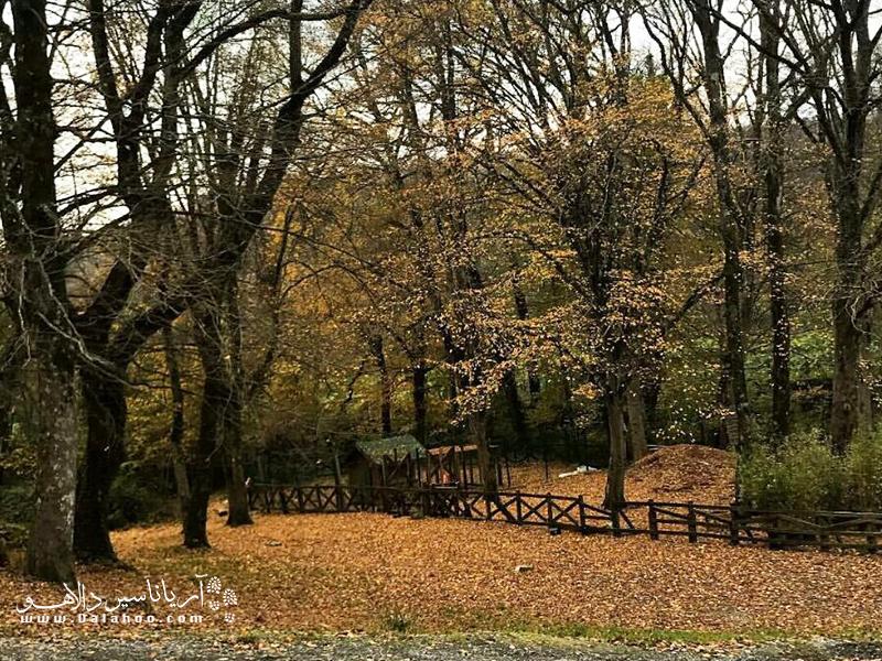 جنگل بلگراد پاییزی بسیار دلرباست.