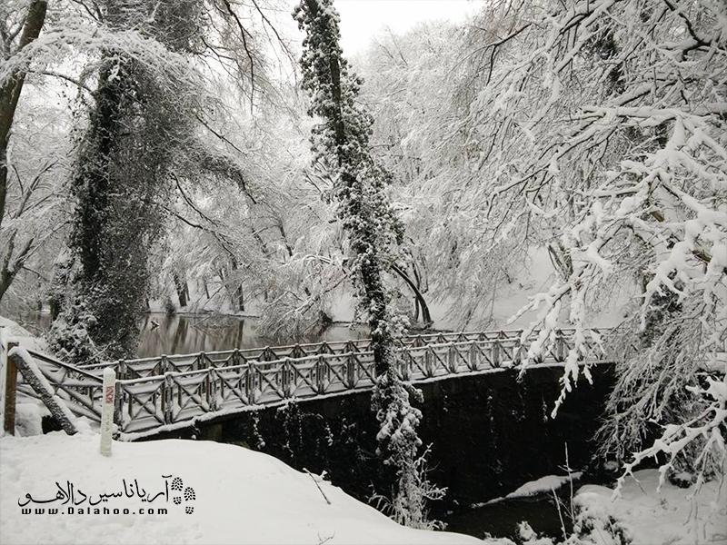نمایی از جنگل بلگراد در روزهای برفی.
