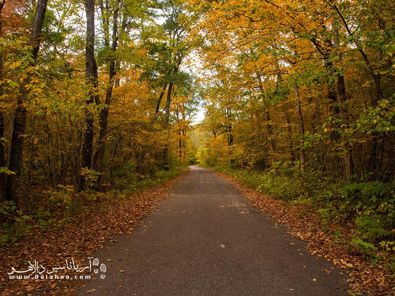 طبیعت زیبای جنگل بلگراد.